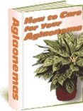 Ebook cover: How To Care for Your Aglaonema